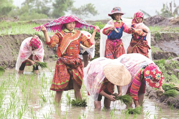 Ha Giang's remote commune to develop eco-toursim hinh anh 1