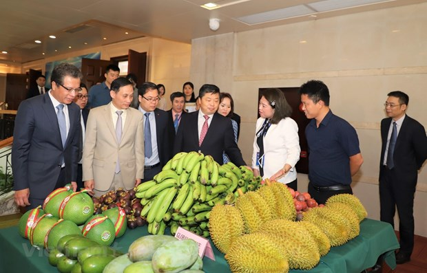 Forum aims to bolster Vietnam's ties with southern China localities hinh anh 1