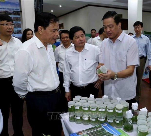 MARD plans to develop more quality plant and animal breeds hinh anh 1