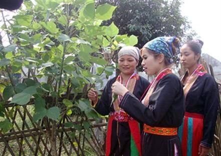 Bac Giang forest planters receive rice support hinh anh 1