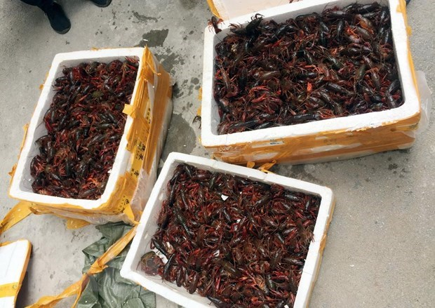 Prompt actions urged to control invasive alien species hinh anh 1