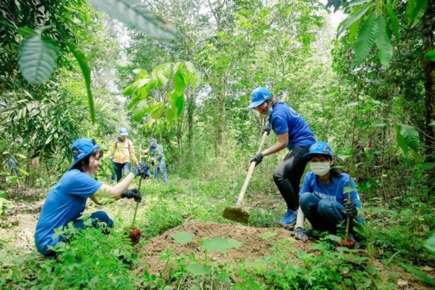 Dong Nai: Forest planting improves habitats of elephants hinh anh 1