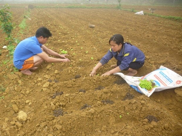Thousands benefit from poverty reduction project hinh anh 1