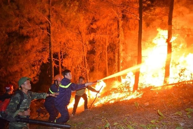 Forest fires ravage central Ha Tinh province hinh anh 1
