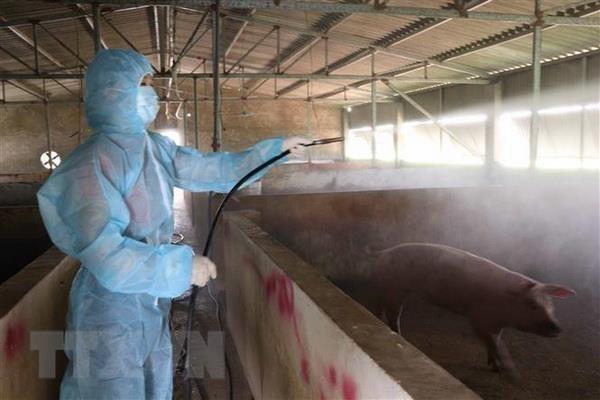 Vietnam develops anti-African swine fever vaccine hinh anh 1