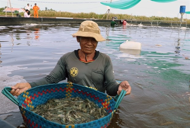 Kien Giang widens efficient rice farming, aquaculture models hinh anh 1