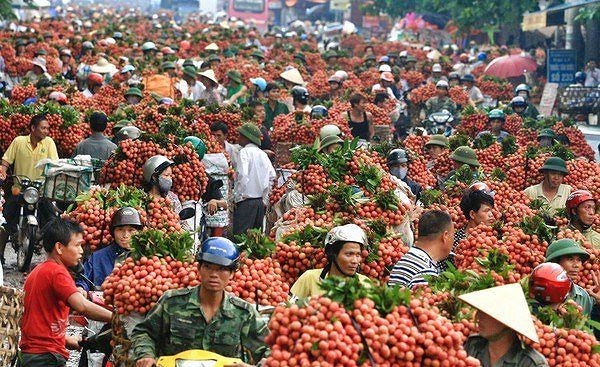 Bac Giang's lychee revenue reaches 60-year high hinh anh 1