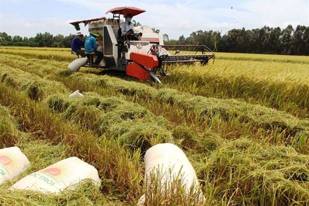 Long An seeks rapid adoption of advanced rice farming techniques hinh anh 1
