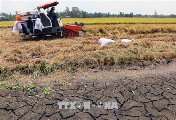 Drought forecast for central, south-central coastal provinces in 2019 hinh anh 1