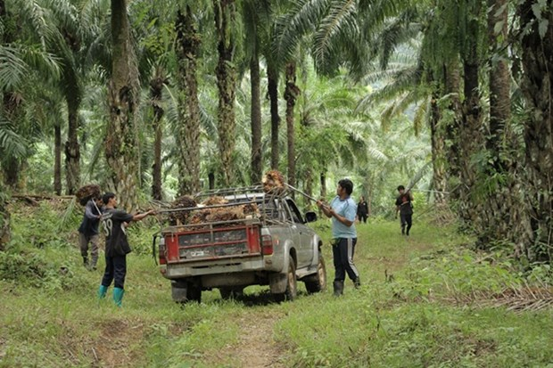 Thailand promotes southern economic development scheme hinh anh 1