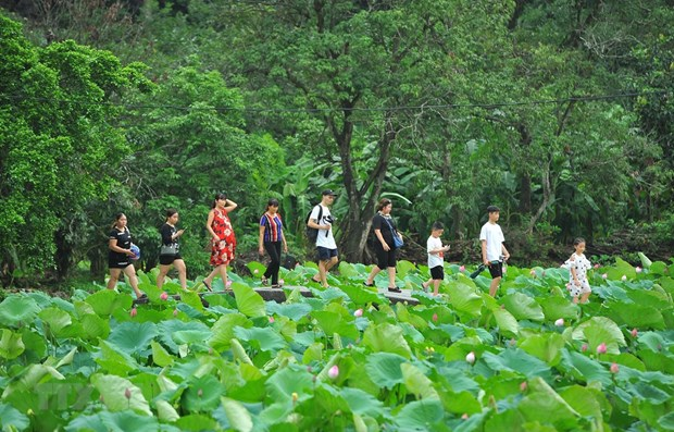 Vietnam among top five favourite places of Japanese tourists hinh anh 1