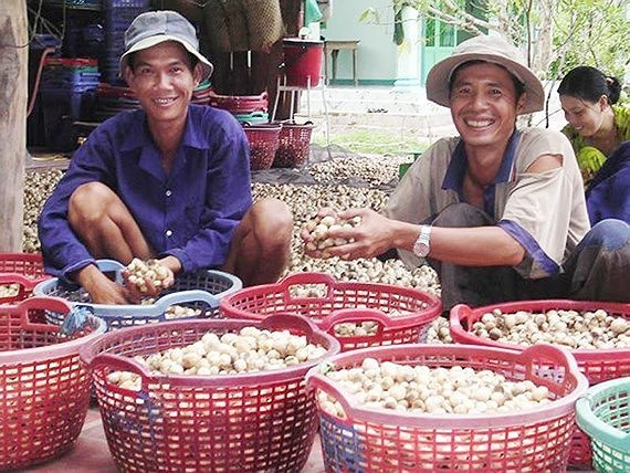Mekong, south-east regions advised to develop mushroom farms hinh anh 1
