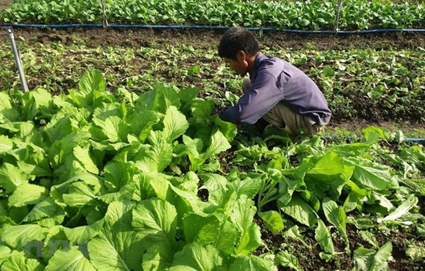 Ba Ria-Vung Tau starts to embrace organic farming hinh anh 1