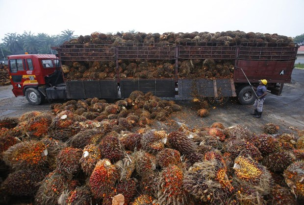 Malaysia to lodge complaint with WTO about EU's palm oil curbs hinh anh 1