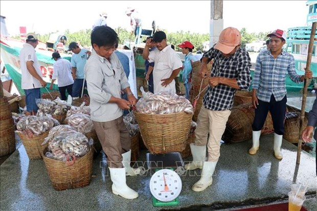 Kien Giang steps up efforts against IUU fishing hinh anh 1