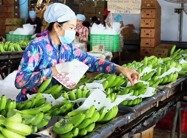 Over 491 million USD invested in processing farm produce in H1 hinh anh 1