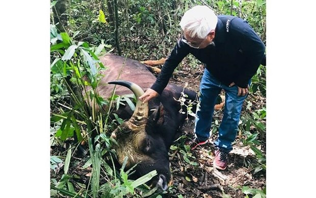 Bison bull found dead at Dong Nai natural reserve hinh anh 1