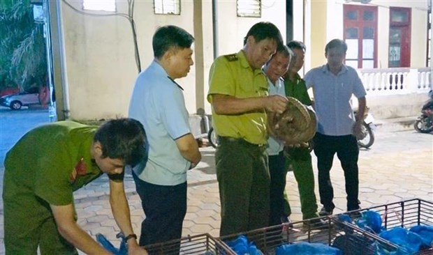 Couple arrested on suspicion of illegally transporting 150 kg of wild animals hinh anh 1