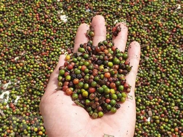 EVFTA opens door wide for Vietnam's agricultural produces: experts hinh anh 1