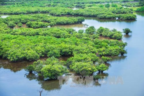 Government issues decree on wetlands conservation hinh anh 1