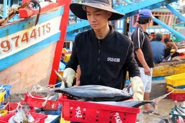 Kien Giang strives to crack down IUU fishing hinh anh 1