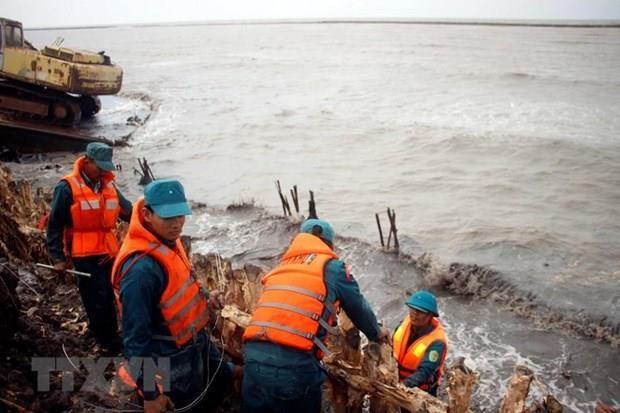 Ca Mau consolidates dykes against erosion along western coast hinh anh 1
