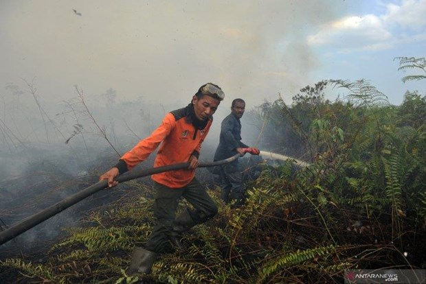 Nearly 19,000 fire hotspots identified in SEA, Papua New Guinea hinh anh 1