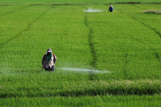 Thailand ceases licensing agricultural chemicals hinh anh 1