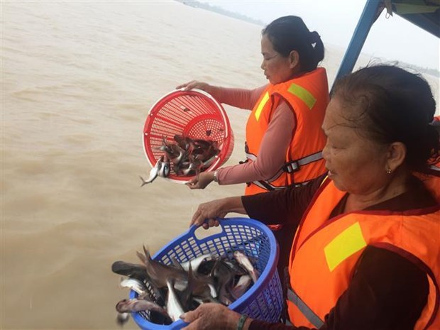 An Giang: 15 tonnes of fish released to protect biodiversity hinh anh 1