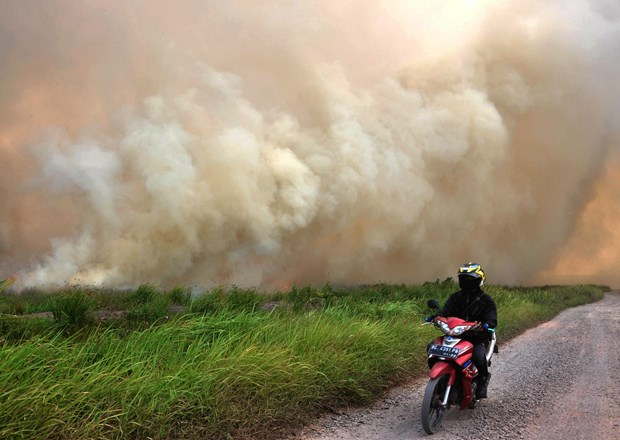 High risks of forest fires in many ASEAN countries hinh anh 1