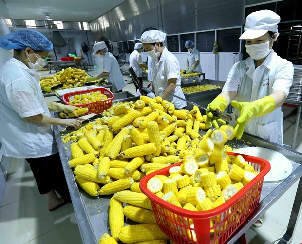 Processing, manufacturing firms expect better performance in Q3 hinh anh 1