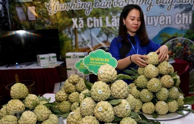Lang Son promotes local Chi Lang custard-apple in Hanoi hinh anh 1