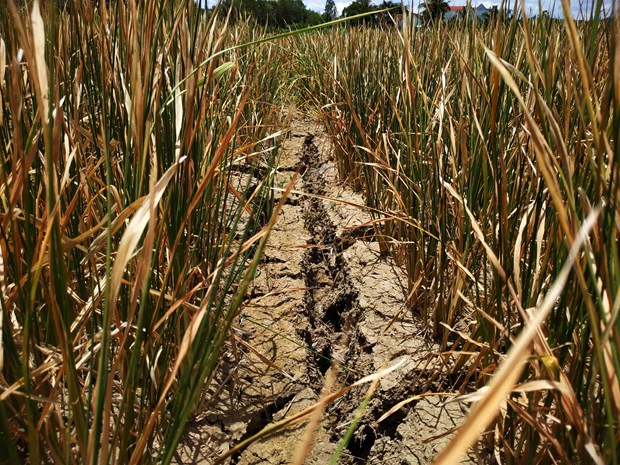 Dak Lak farmers hit by serious drought hinh anh 1