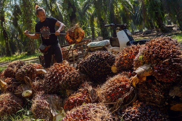 Thailand sets guaranteed palm oil price hinh anh 1
