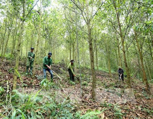 Law enforcement to be intensified to protect forest in Central Highlands hinh anh 1