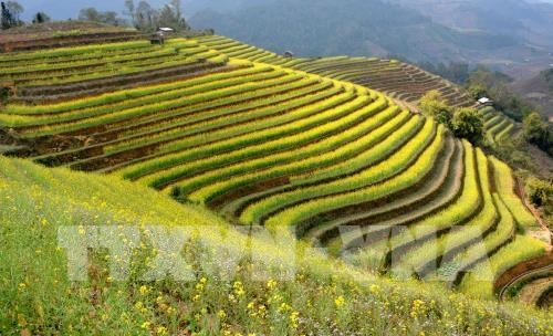 Mu Cang Chai terraced field festival to feature various activities hinh anh 1