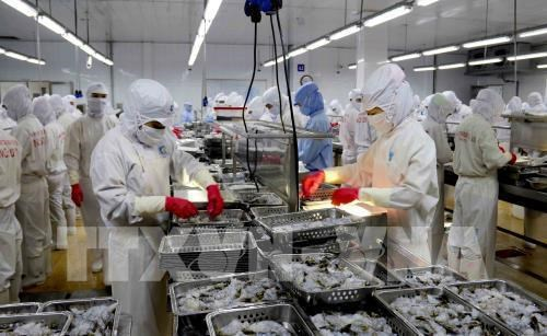 Shares of shrimp exporters surge after US cuts anti-dumping tariffs hinh anh 1