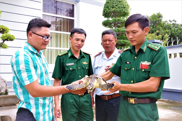 Ba Ria-Vung Tau: Rare sea turtle released into nature hinh anh 1