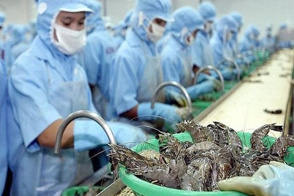 Vietnamese shrimp exporters enjoy zero taxes to US hinh anh 1