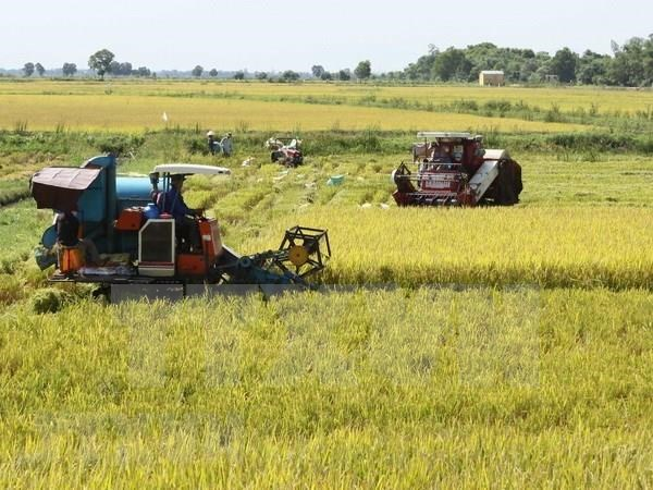 Mekong Delta expects 150,000 more tonnes from summer-autumn rice crop hinh anh 1