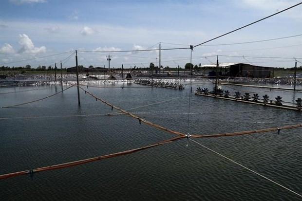 Kien Giang farmers increase harvests of aquatic species hinh anh 1