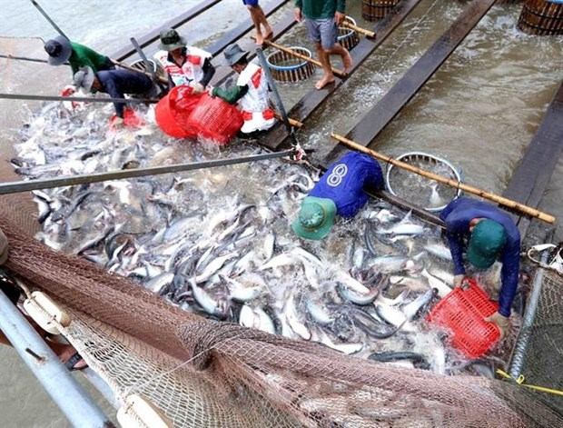 Tra fish export continues downward trend hinh anh 1