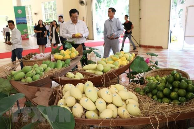 EU enhances inspections on Vietnam's agricultural products from Sept 1 hinh anh 1