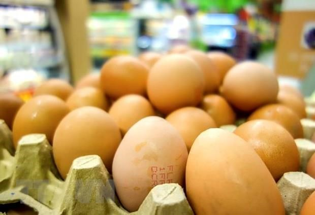 Indonesia to destroy millions of eggs to boost chicken prices hinh anh 1
