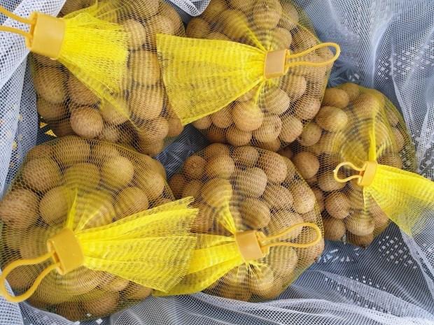 Hanoi's late-ripening longan exported to Australia hinh anh 1