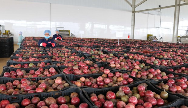 Central Highlands' largest fruit, vegetable processing centre opened hinh anh 1
