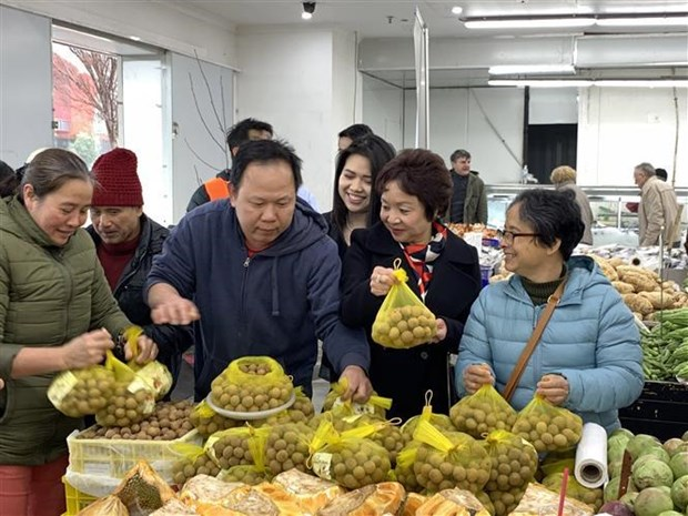 Vietnam's fresh longan makes debut in Australia hinh anh 1