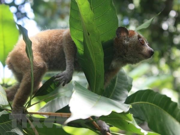 Project launched to boost ties in threatened species conservation hinh anh 1