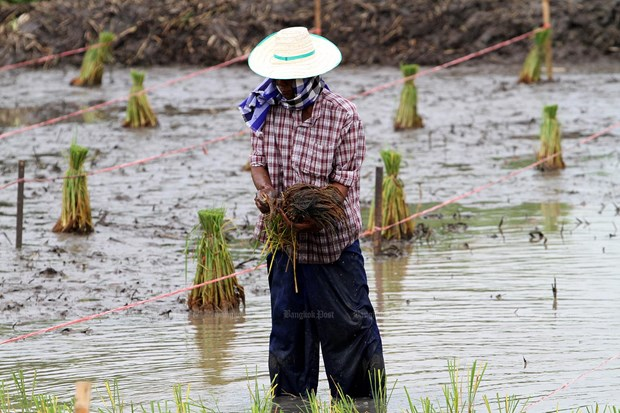 Thailand to announce economic stimulus packages for farmers hinh anh 1