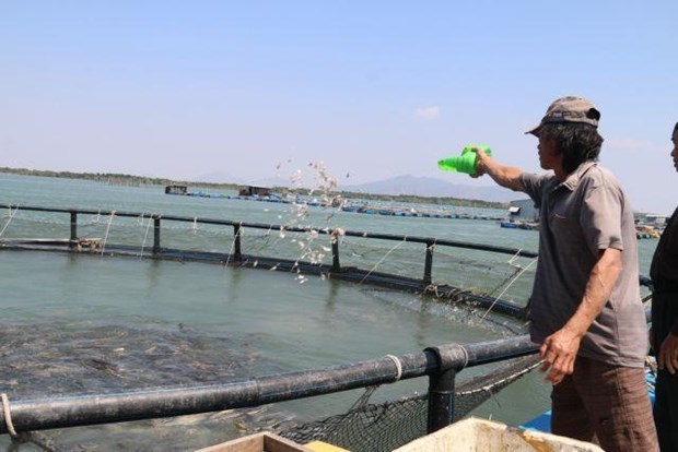 Time to tap ocean aquaculture potential: experts hinh anh 1